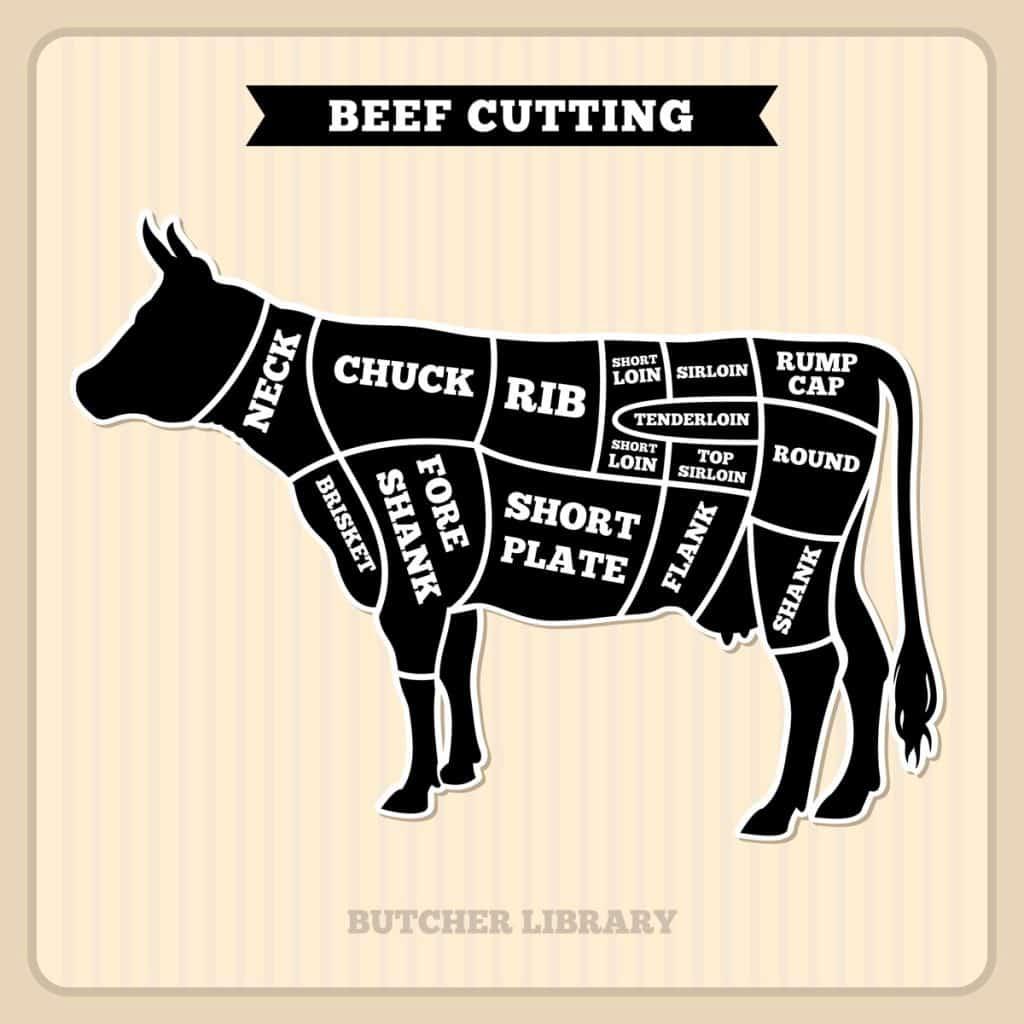 cow cuts butcher vector diagram