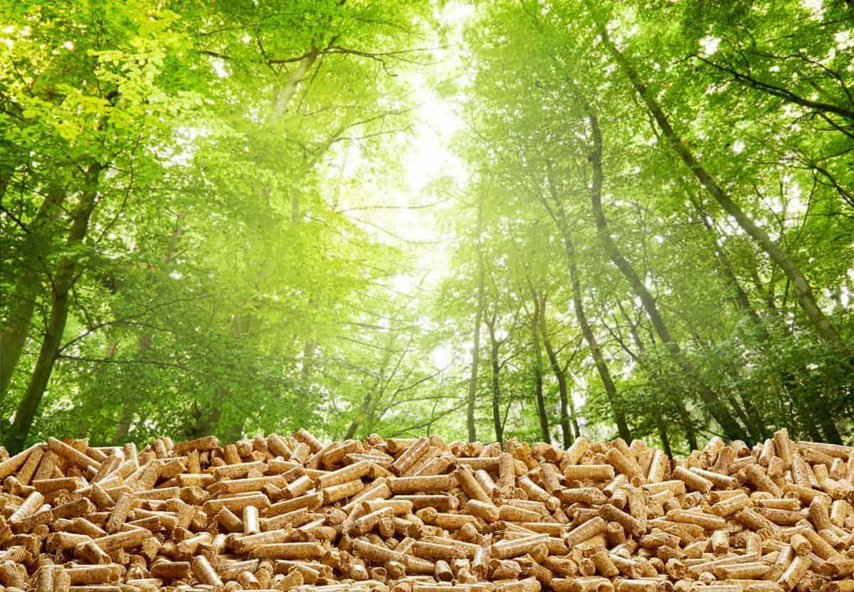 Wood Pellets vs Wood Chips: Creating a Taste Sensation